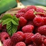 ボイセンベリーには豊富なビタミンが含まれる